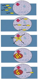image of the development of a biofilm